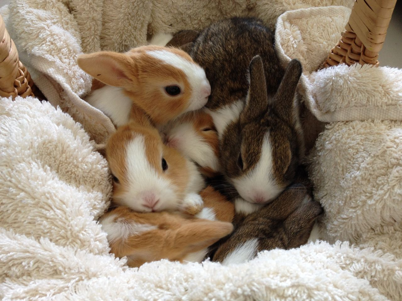 bunnies-benchmarks